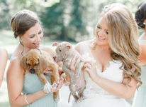 Thumbnail image for Wedding Party poses with Adoptable Pups for Wedding Photos